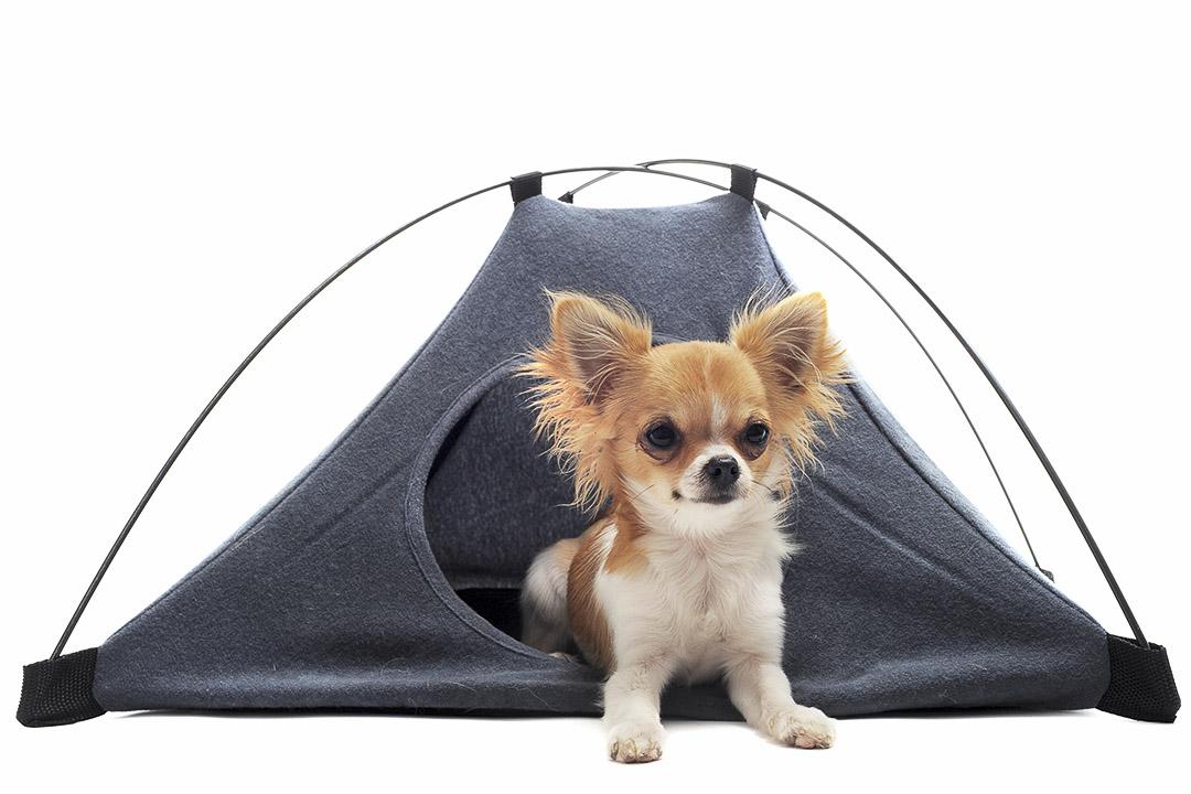 un petit chien en avant de sa tente